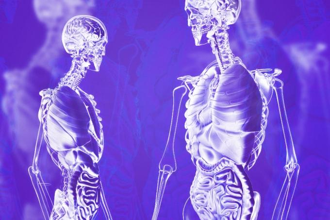 Curiosidades do corpo humano
