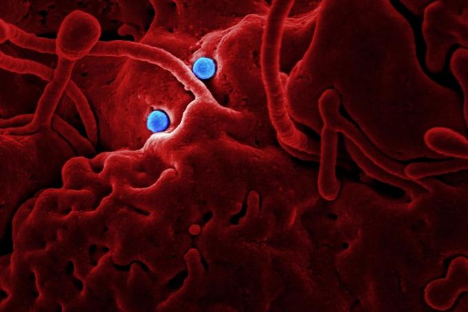 Coronavírus – o que é crescimento exponencial e como pode cair nas provas