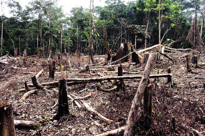 Atualidades – a situação do desmatamento na Amazônia