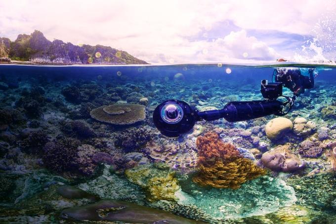 em busca de corais