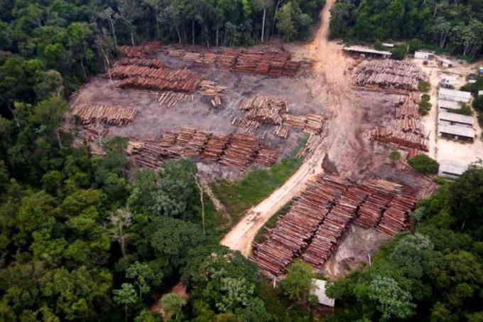 Madeira apreendida na divisa do Amazonas com o Pará