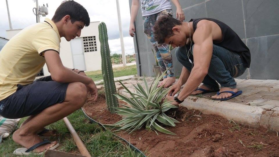 alunos plantam mudas da caatinga. Crédito: